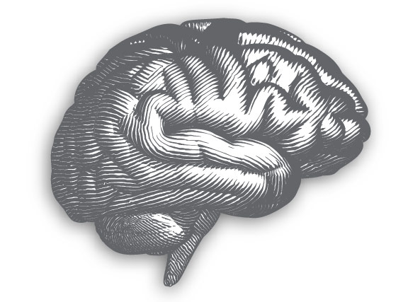 Black and white drawn image of brain