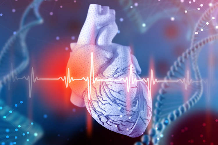 3d illustration of human heart and cardiogram on futuristic blue background